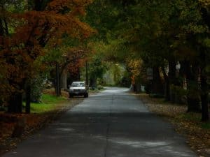 Maintaining the tree canopy of Waterford Virginia Streets